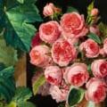 【芸術】リヒテンシュタイン 侯爵家の至宝展@Bunkamura ザ・ミュージアム